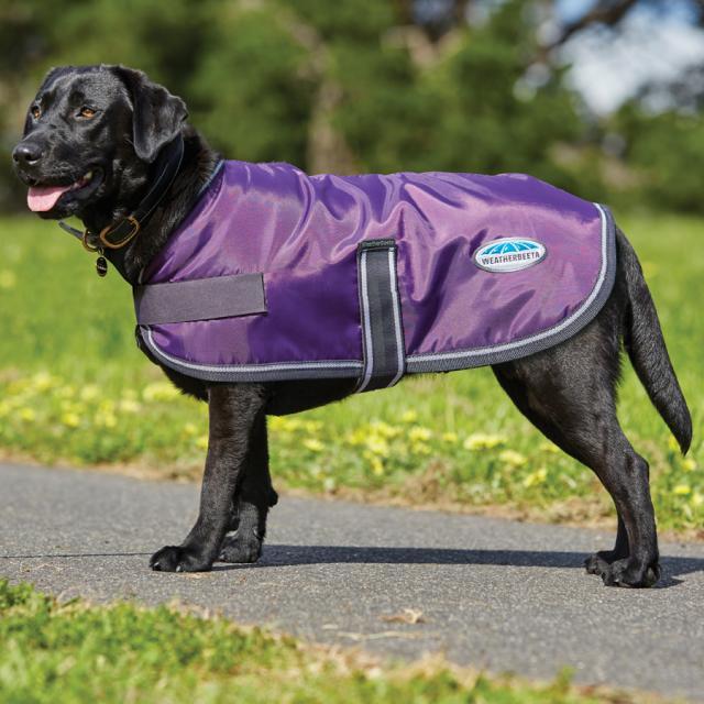 WeatherBeeta Windbreaker 420D Dog Coat Purple/Black