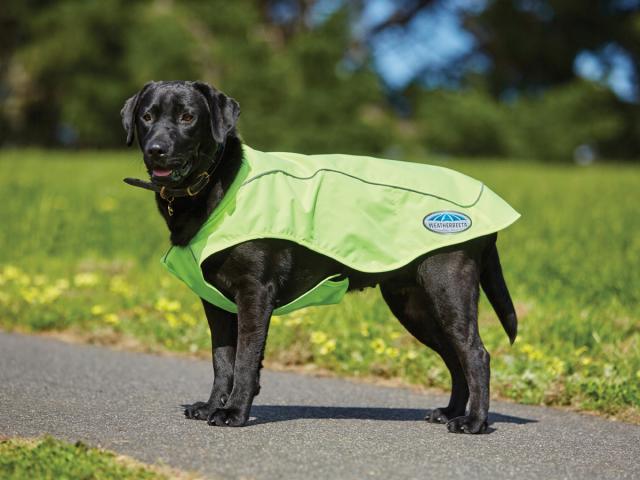 WeatherBeeta Reflective Exercise Dog Coat Yellow