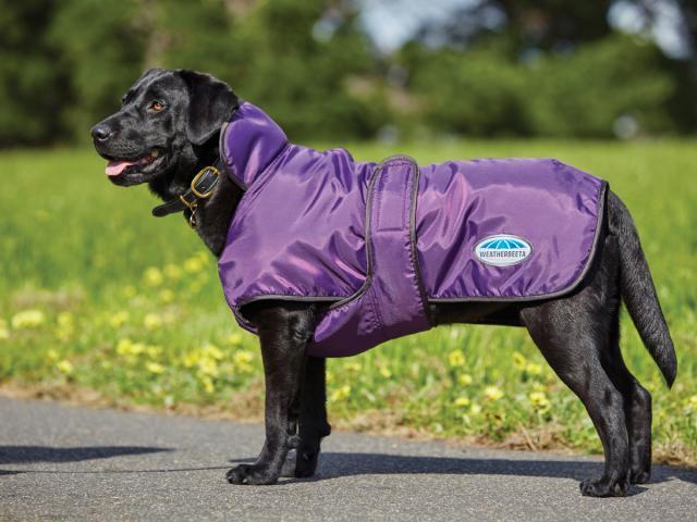 WeatherBeeta Windbreaker 420D Deluxe Dog Coat Purple/Black